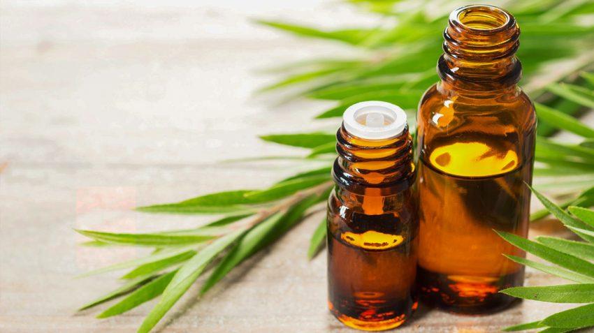 tea-tree-essential-oil-for-skin-care